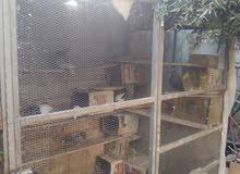 قفص يصلح لكافة أنواع الطيور والحيوانات للاستفسار 0789872665