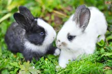 2 rabbits white and grey
