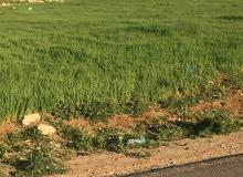 قطعة ارض في شفا بدران حوض مرج الاجرب