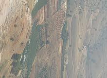ارض باجمل مناطق وادي شعيب بعد دوار ماحص باتجاه وادي شعيب