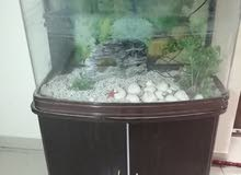 حوض اسماك كبير
