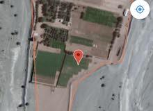 مزرعه للبيع في بو كربه ضنك 16 فدان