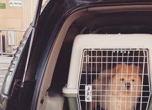 توصيل الكلاب والقطط