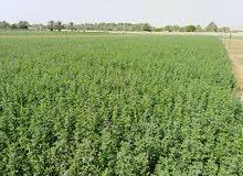 مطلوب مزرعہ قت اللایجار فی عمان