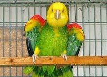 فندقة طيور مكه