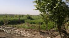 بستان للبيع في الصويرة على نهر دجلة