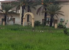 مزرعه على المعبد.بين كوبري القصر وكوبري السواني