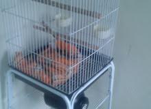 afas parrot