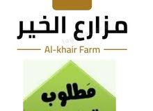 مطلوب عمال مزارع خضر ونخيل مرتبات 1000 درهم بالاضافه إلى عمل أقامه وتأمين صحي