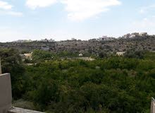 نقل السياح إلى الجبل الأخضر وجبل شمس