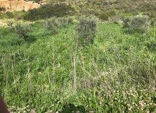 ارض فيه 60 نصبت زيتون منطقه يارين دلمين و400 متر ارض جالسه ومناسبه للعمار