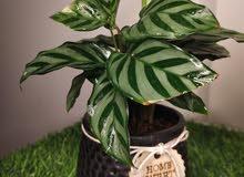 indoor plants ( Rare)