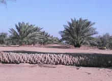 للجادين ...فرصة حقيقية ارض زراعية للبيع بالفيوم بمنطقة الفنانين ورجال الاعمال 10