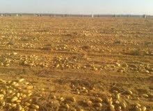 ارض. بها جميع المرافق مياه الشرب والكهرباء والري نيلي مصدر دائم مسطحه. ومجهزه للزراعه.