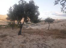 ارض 10دونم مشجرة زيتون ع قمه جبل مطله ع الوادي باكمله