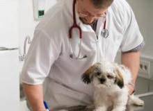Wanted certified Dr.Veterinarian