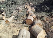 تقليم الحدائق وتقطيع الأشجار