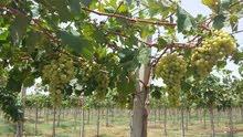 مزرعة للبيع مساحتها 7 هكتار فلاحية ومجهزة بجميع الأجهزة العصرية للفلاحة