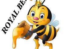 عسل نحل طبيعي بالاسكندرية