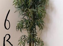 Muscat –Used Natural and Artificial Plants available for immediate sale
