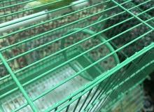 طيور الحب 200 للفردين والقفص