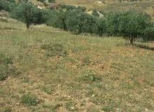 7 دونمات السلط ام زيتونة تصلح ل سكن او مزرعة الارض سهلة