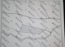 ارض 9 دونم للبيع في الكرك