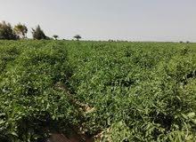 امتلك قطعه ارض مساحه 50 فدان باقل سعر للفدان