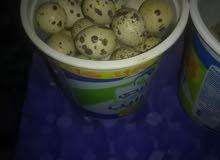بيض فري للبيع للأكل والفقاسات بسعر مغري