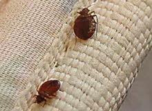العالمية لخدمات مكافحة الحشرات والتعقيم ضد الفيروسات الموسمية