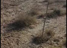 قطعة أرض طابو زراعي فلاحة
