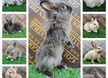 ارانب مختلفه different kind of rabbits