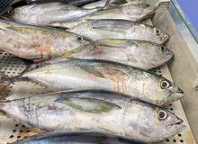 يتوفر لدينا أسماك الجيذر الطازج والمشوي جميع الأحجام وإن بالحبه1.200والصافي2.500