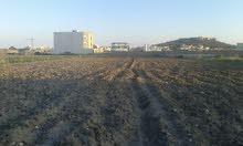 أرض للبيع طريق المنصورة قليبية