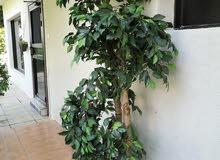 شجرة زينة صناعية مثل الحقيقية
