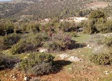 قطعة أرض مميزه للبيع وسط غابة دبين دونم و 132 متر