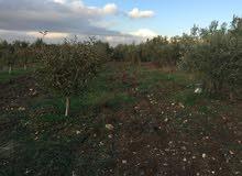 مزرعة للبيع في عمان ناعور بشكل عاجل