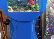 حوض سمك كتير حلو قاعدة والحوض قطعة واحدة