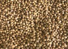 تمر للبيع رطب وأخضر برحي جميل بالكيلو بالعبدلي