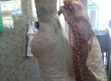 لحم حوار طازج