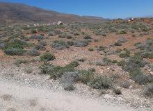 أرض في سفوح جبل الشيخ طريق عرنة.