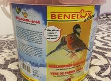 دود بلجيكي للصفارد والطيور