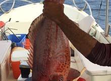 قارب بوت رحلات صيد سمك
