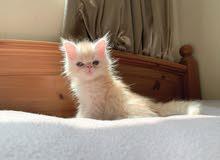 picky face kitten