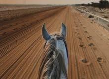 حصان مع اوراق او بدون