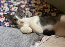 Playful Kitten for Donation