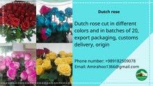 فرع الهولندية بألوان مختلفة