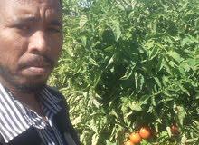 مهندس زراعي باحث عن عمل