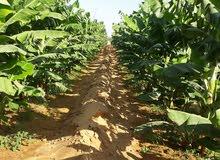ارض زراعيه ممتازة للبيع
