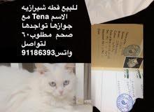 قطه شيرازيه لديها جواز سفر